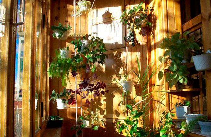 Как сделать зимний сад на балконе и лоджи своими руками.