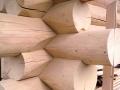 Канадская чаша, дикий сруб угол дома из бревен